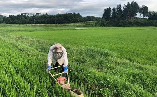 【30年度産】【新米】有機たい肥を使い減農薬栽培したこだわりのお米「郷土」5kg
