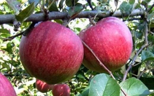 A0149 選べる旬の口内りんご