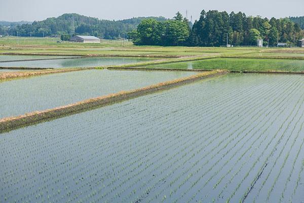 日本三大開拓地「矢吹町」