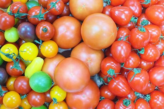 彩華やかなトマトに目を惹かれ、多くの人が試食に立ち寄った愛知県碧南市