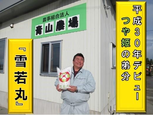 青山農場産【元年産】特別栽培米雪若丸5kg