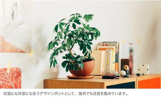 碧南特産!呼吸をする素焼鉢「マルコポット」2.5号と4.5号のセット H070-002
