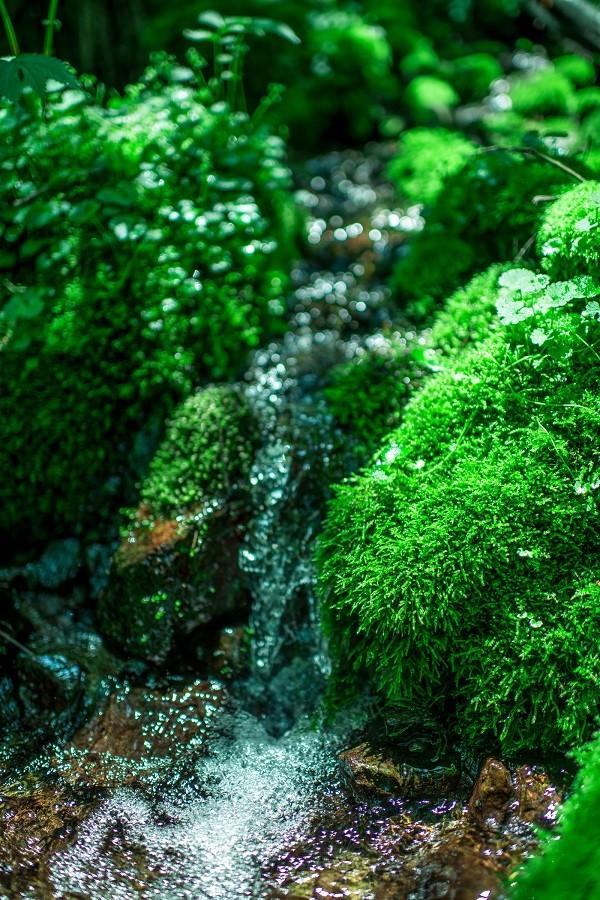 世界自然遺産白神山地の水