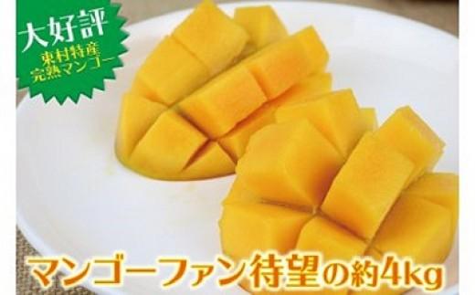 【2019年発送】農家直送!完熟マンゴー待望の約4kg (約2kg×2箱)