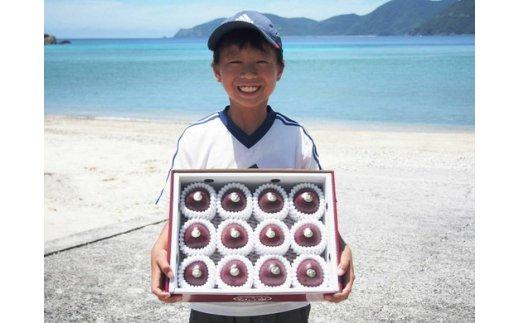 B-85 加計呂麻島産パッション(厳選12玉化粧箱入り 1箱)カケロマパッショングループ