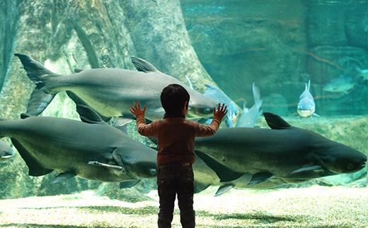 508 世界淡水魚園水族館「アクア・トトぎふ」入館券5枚セット