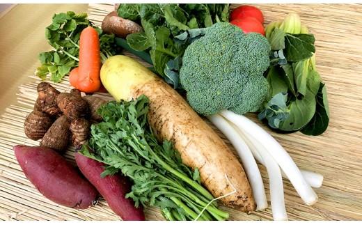 【3ヶ月定期便】自然栽培の野菜詰め合わせ(10~12品目)