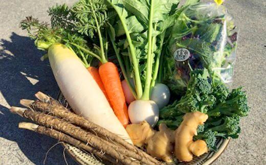 【定期便!全4回】旬のお野菜セット!中土佐の季節を届ける中里自然農園