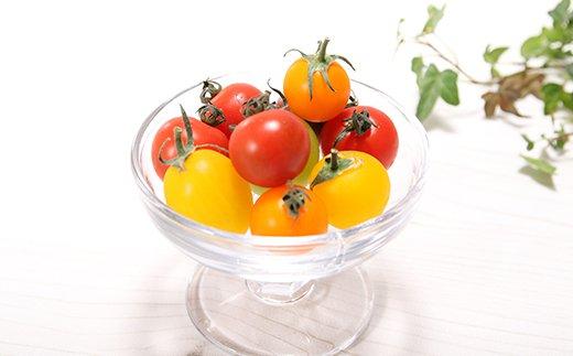 まるでトマトの宝石箱!フルーツジュエリートマト H004-042