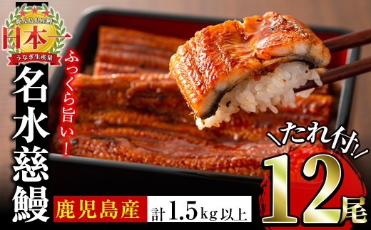 f0-012 鹿児島県産うなぎ蒲焼名水慈鰻 12尾