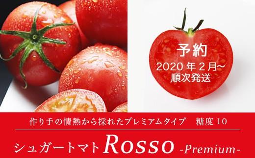 シュガートマトロッソプレミアム10 化粧箱1.0kg 糖度10.0度以上【1021438】