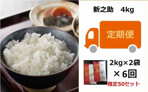 [D534]【定期便】お米の十一屋の新之助(4kg×6回)