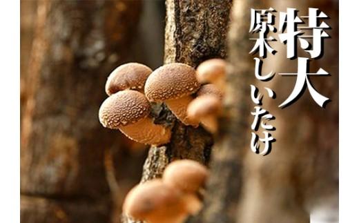 特大 原木しいたけ(約2kg)