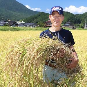 植え付ける株の間隔を広げることで太い株づくり・大粒の米作りに努めています。