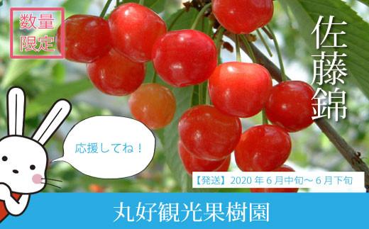 No.0501 <生産者に希望の光を!>さくらんぼ佐藤錦 家庭用 1kg(500g×2パック)