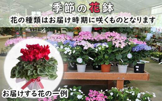 【010-014】館山季節の花鉢