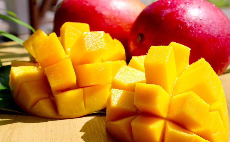 一年で一度、夏の時期だけ。品質の良いマンゴーを作るために
