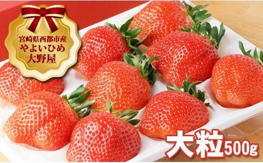 【先行予約】宮崎県西都市 大野屋の苺 厳選大粒いちご やよいひめ シングル (1P)<1-37>