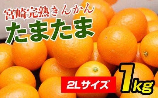 【先行予約】宮崎県 西都市産 きんかんたまたま1kg<1-136>