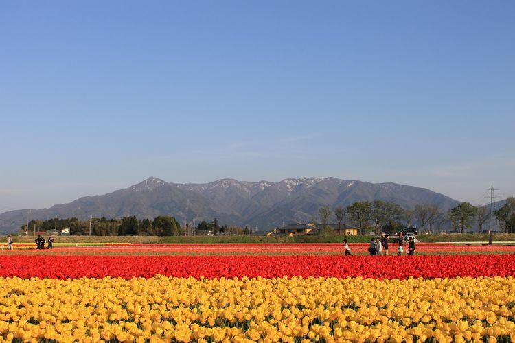 「花のまち」とよばれる新潟県五泉市