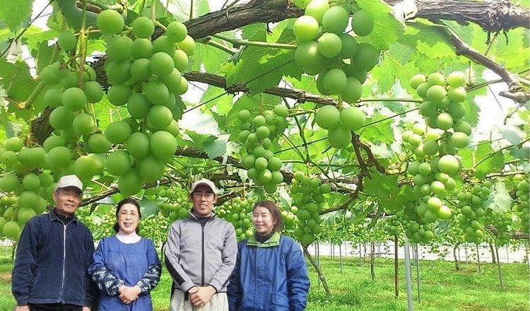 ブドウを育てて50年!和泉農園がお届けします!