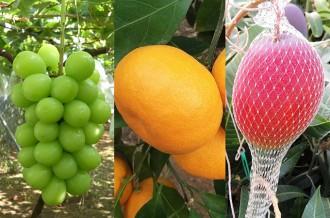 水のまち鹿島の恵・美味しいフルーツ特集