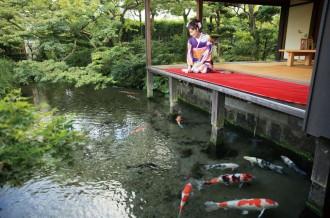 水の都・島原が育んだ「長崎和牛とふぐ」特集