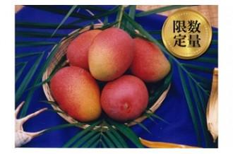 沖縄県東村のマンゴーの写真
