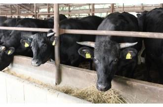 豊かな自然の中で育てられた地域ブランド牛をお届けします