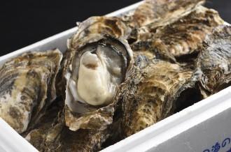 全国で唯一!1年中生食できる牡蠣