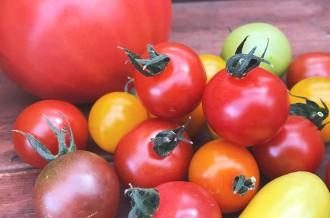 とっても甘い色とりどりの高リコピントマト!美しい美味しさにこだわり続ける長田農園から笑顔とHAPPYをお届けします
