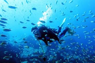 今年の夏は、西伊豆の海を楽しもう!アクティビティ特集!