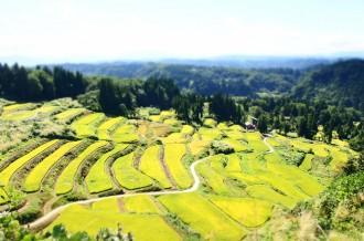 日本一のブランド米!一度は食べたい!!新潟おぢやの魚沼産コシヒカリ