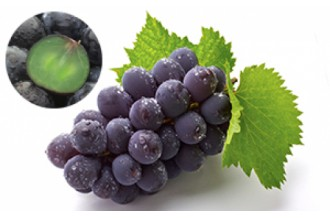 果実の宝庫、信州のあま~いフルーツお届けします!