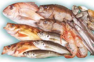 旬の魚を庄内浜からお届け!