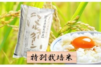新米受付開始!もちもち触感の「ミルキークイーン」や幻のお米「はつしも」も!岐阜県池田町のおいしいお米をお届けします