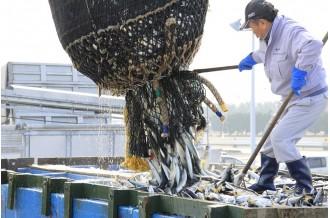サバ漁日本一!ブーム到来「神栖市波崎漁港」