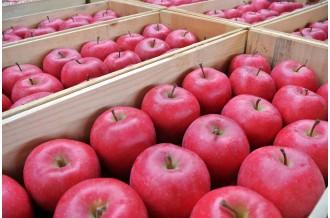 生産量日本一!弘前市のりんご
