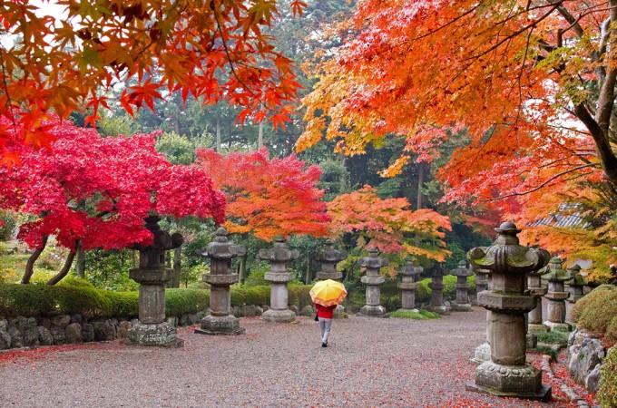 行楽の秋、飯能の豊かな自然の中でゆったり滞在特集!