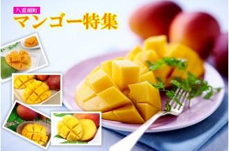 2019年発送◆農家さん直送!美味しいマンゴー特集