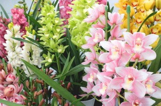 「花のある暮らし。」越知町の洋ラン特集!