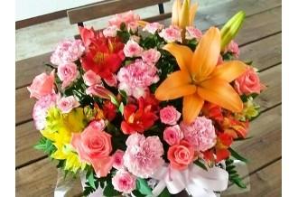「笑顔満開!春のお祝い特集」 貝塚市の返礼品で、卒業・入学・お祝い準備!