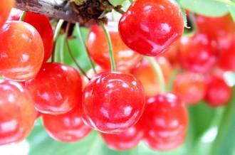 四季折々が育む、美味しいフルーツ
