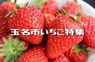 玉名産のおいしいイチゴをご紹介♪