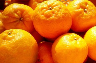 ランキング常連!須崎市の柑橘系集めてみました!