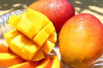大人気!今帰仁村で育ったマンゴーをぜひお召し上がりください!