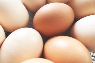 新鮮な四万十町産の卵
