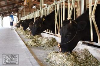 宮崎県立高鍋農業高校の生徒が育てた宮崎牛
