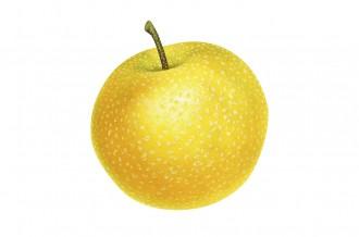 梨のイメージ画像