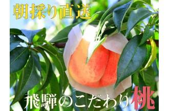 飛騨で育った旬な甘~い桃を採れたてでお届けします。